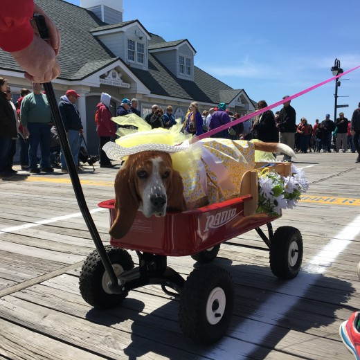 Doo Dah Parade Ocean City NJ